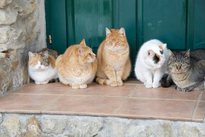 Familia de pisici de la Weidenthal 167