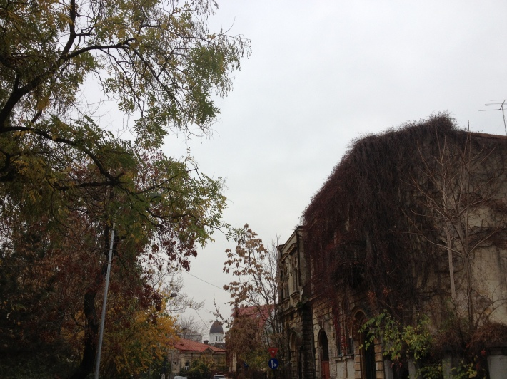 View din parcul Cazzavilan